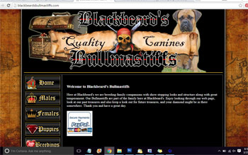 Black Beard's Bullmastiffs