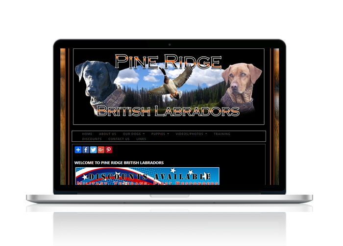 Labrador Retriever Website